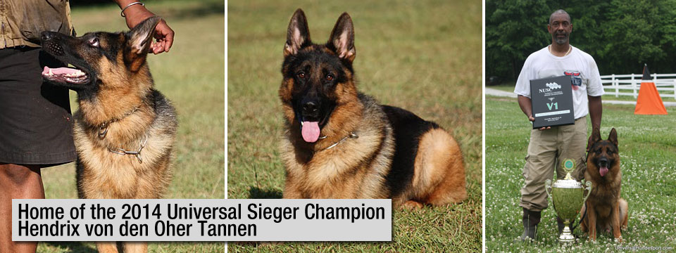 Home of the 2014 Universal Seiger Champion Hendrix